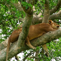 Queen Elizabeth National Park, Queen Elizabeth National Park, Uganda