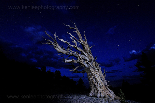 Ancient Bristlecone Pine Forest, Inyo National Forest, California