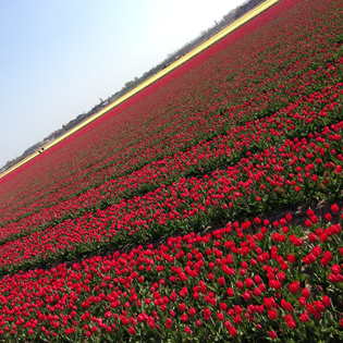 Keukenhof, Basecamp, Lisse, The Netherlands