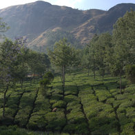 Pallivasal Tea Estate, Idukki, India