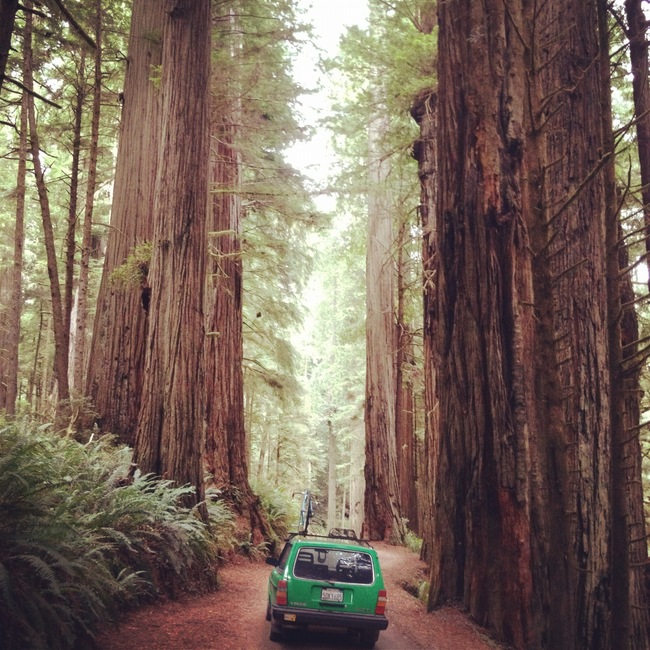 Redwood National Park, Orick, California