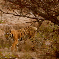 Ranthambore National Park, Sawai Madhopur, India