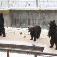 Shōwa-shinzan Bear Ranch, Sobetsu, Japan