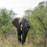 Kruger National Park, Kruger Park, Kruger Park, South Africa
