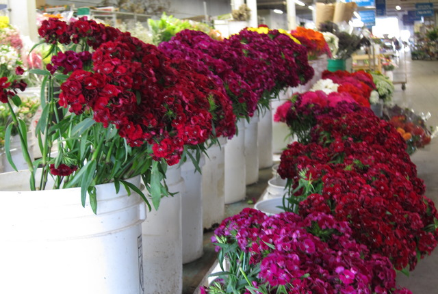 Holland Flower Market, Carlsbad, California