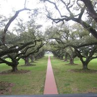 Oak Alley Plantation, Vacherie, Louisiana