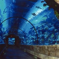 Shark Reef Aquarium at Mandalay Bay, Las Vegas, Nevada