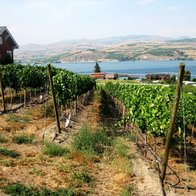 Nefarious Cellars, Chelan, Washington