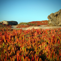 Pacific Grove, CA, Pacific Grove, California