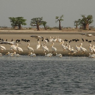 Parc national du delta du Saloum, Foundiougne, Senegal
