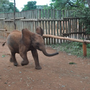 David Sheldrick Wildlife Trust, Nairobi, Kenya