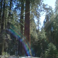 Mariposa Grove, Fish Camp, California