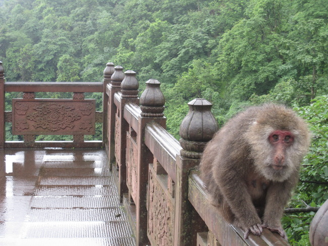 Mount Emei Scenic Area, Leshan, China