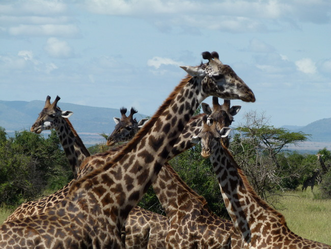 Serengeti National Park, Serengeti National Park, Tanzania