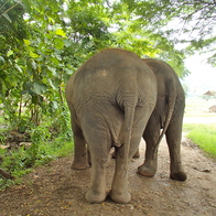 Elephant Nature Park, Mueang Chiang Mai, Thailand