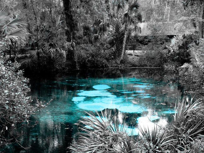 Juniper Springs, Ocala National Forest, Florida