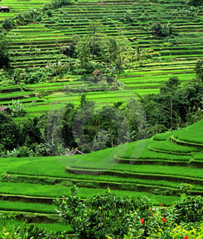 Sideman Valley Hike, Sidemen, Indonesia