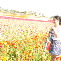 Flower Fields at Carlsbad Ranch, Carlsbad, California