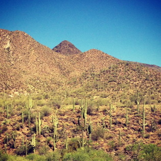 Things To Do In Cave Creek Arizona Travel To United