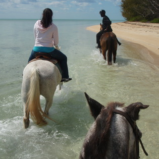 Windsor Equestrian Centre & Happy Trails Stables, New Providence, The Bahamas