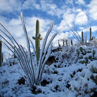 The Best of Winter in Arizona