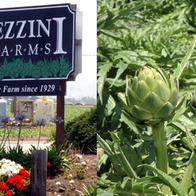 PEZZINI FARMS, Salinas, California