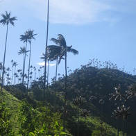 Valle De Cocora, Salento, CO