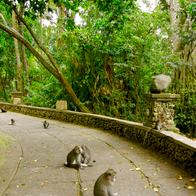 Sacred Monkey Forest Sanctuary, Ubud, Indonesia