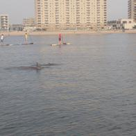 Rudee Inlet Stand Up Paddle, Virginia Beach, Virginia