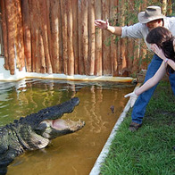 Gatorland, Hunters Creek, Florida