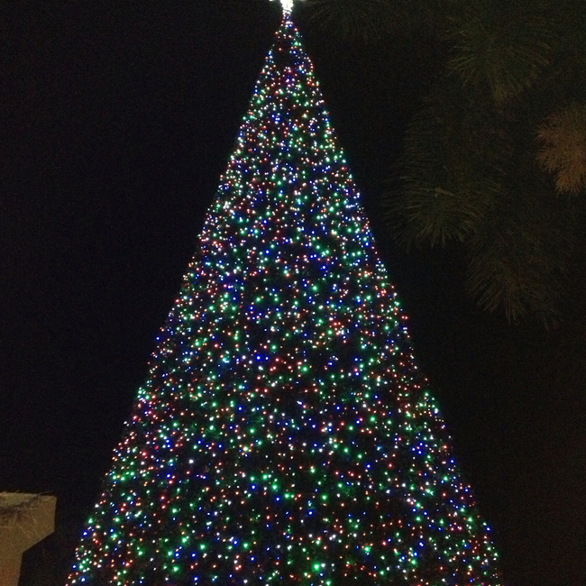 Delray Beach Xmass Tree, Delray Beach, Florida