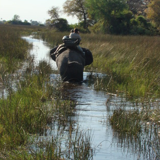 The Okavango Delta and Botswana Safari