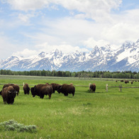 Grand Teton National Park, Jackson, Wyoming