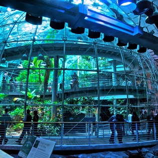 California Academy of Sciences, San Francisco, California