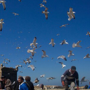 The Port, Essaouira, Morocco