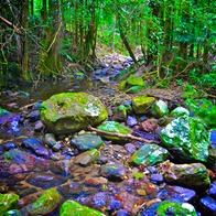 Crystal Creek Rainforest Retreat, Upper Crystal Creek, Australia