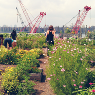 Eagle Street Rooftop Farm, New York, New York
