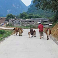 Country Road, Guilin, China