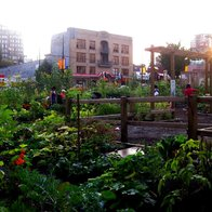 Davie Village Community Garden, Vancouver, Canada