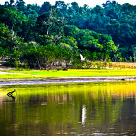 Amazon River, Curuá, Brazil