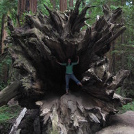 Ave of the Giants, CA, Myers Flat, California