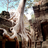 Ta Prohm, Krong Siem Reap, Cambodia