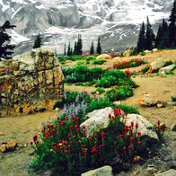 Mount Rainier National Park, Ashford, Washington