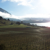 Rippon Vineyard & Winery, Wanaka, New Zealand