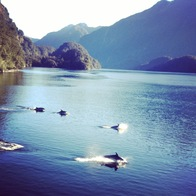 Doubtful Sound Daytime & Overnight Cruises, Manapouri, New Zealand