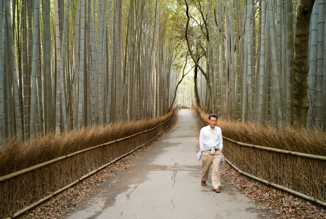 Arashiyama bamboo forest, Ukyo Ward, Japan