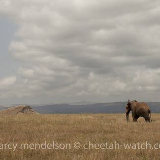 Lewa Wildlife Conservancy, Meru, Kenya
