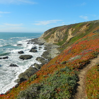 Bodega Head State Park, Bodega Bay, California