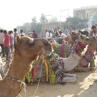 Pushkar camel fair, Pushkar, India