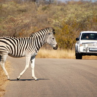 Kruger National Park, Kruger Park, South Africa